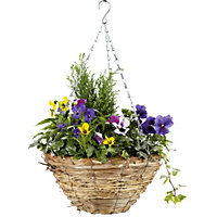 Mixed Autumn Hanging Basket - 30cm
