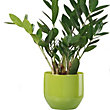 Pure Green Pot - 22cm