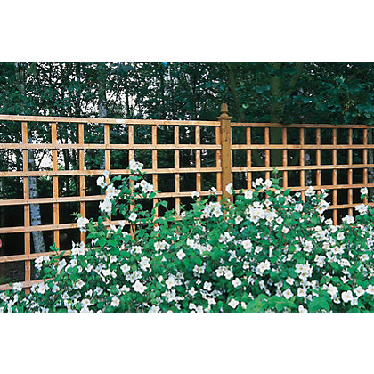 Image for Trellis - 6 x 1ft from StoreName
