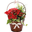 Extra Large Christmas Gift Basket