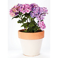 Cream Westbury Pot - 26cm